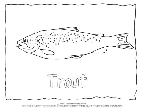 lake fish coloring pages common trout picture to color 3 brown trout coloring page