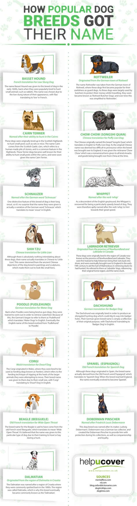 How To Find By Their Name How Popular Breeds Got Their Names Infographic Animal Bliss