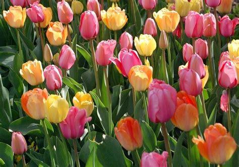 fiori di stagione febbraio fiori di stagione fiori da giardino consigli per