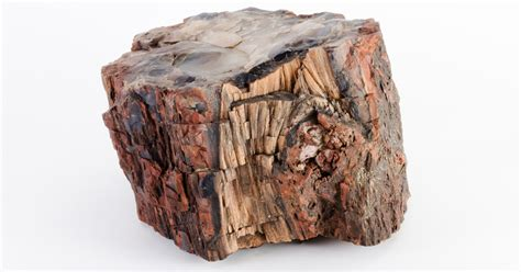 petrified wood slide show bad luck in the petrified forest the new yorker