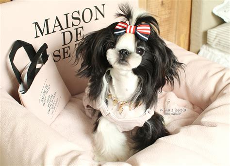 joypia haircuts 1000 images about shih tzu hair styles on pinterest