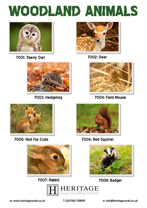 Animal Gift Card - woodland animal cards heritage cards souvenirs ltd