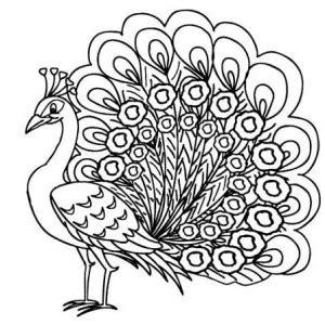 imagenes reales para colorear dibujos de pavos reales 187 pavorealpedia