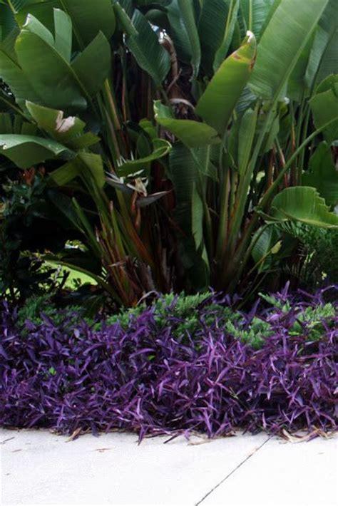 rainforest colors best 25 tropical colors ideas on tropical