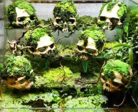 Snake Terrarium on Pinterest   Reptile Cage, Snake Cages and Reptiles
