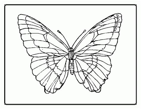 butterflies to color butterfly patterns to color coloring home