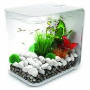 Proper Betta Fish Tank Beginners guide to setting up a betta fish tank