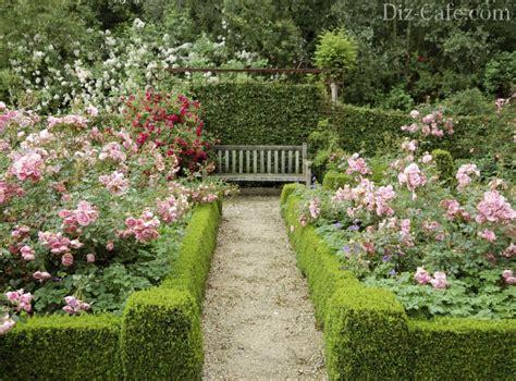landscaping design  roses wilson rose garden