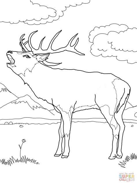 Deer Fighting Coloring Pages | buck deer fighting coloring coloring pages