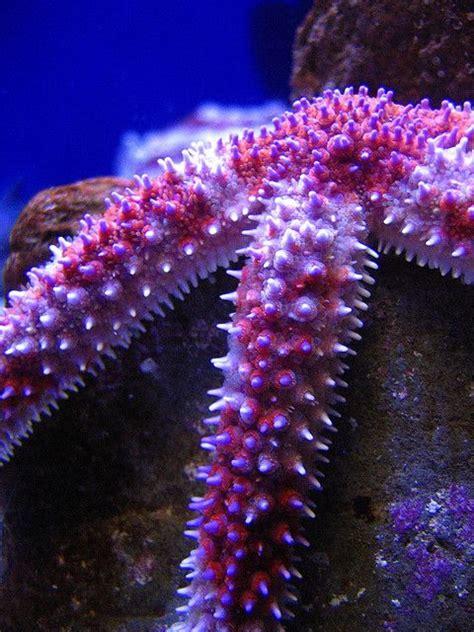 deco maison bord de mer 3301 les 39 meilleures images du tableau shell sea sur