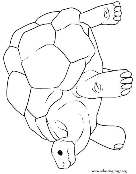 free coloring pages of tortoise shell