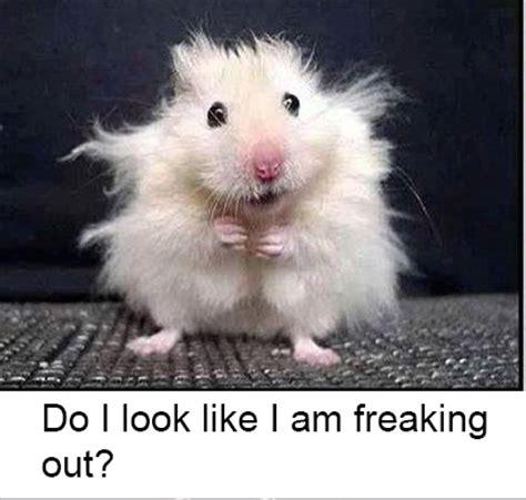 Freaked Out Meme - freaked out meme freaking out gifs find on giphy i m