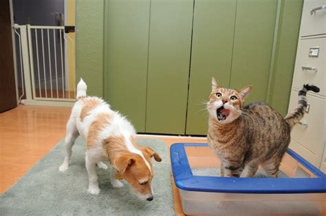 cat going to bathroom outside of litter box 10 health facts that could save your cat s life page 9