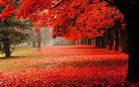 papel de parede natural parque outono folhas vermelhas
