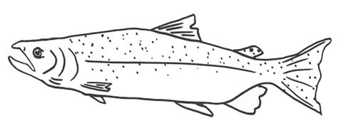 king salmon coloring page time to fly free salmon coloring pages