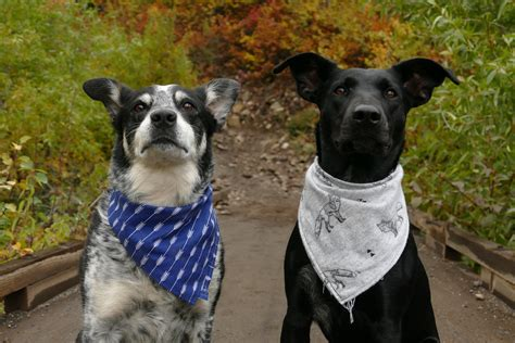 dog breeds  pet insurance