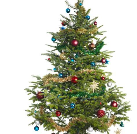weihnachtsbaum bilder bilder19