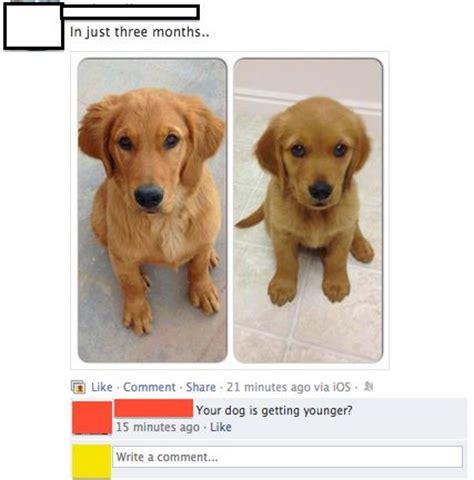 Golden Retriever Meme - benjamin button dog funny memes golden retriever