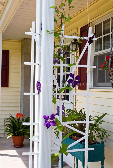 front porch  climbing clematis vine  trellis window