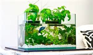 Indoor Herbal Garden - how to improve fish tank health with aquaponics systems and herbal gardens the permaculture