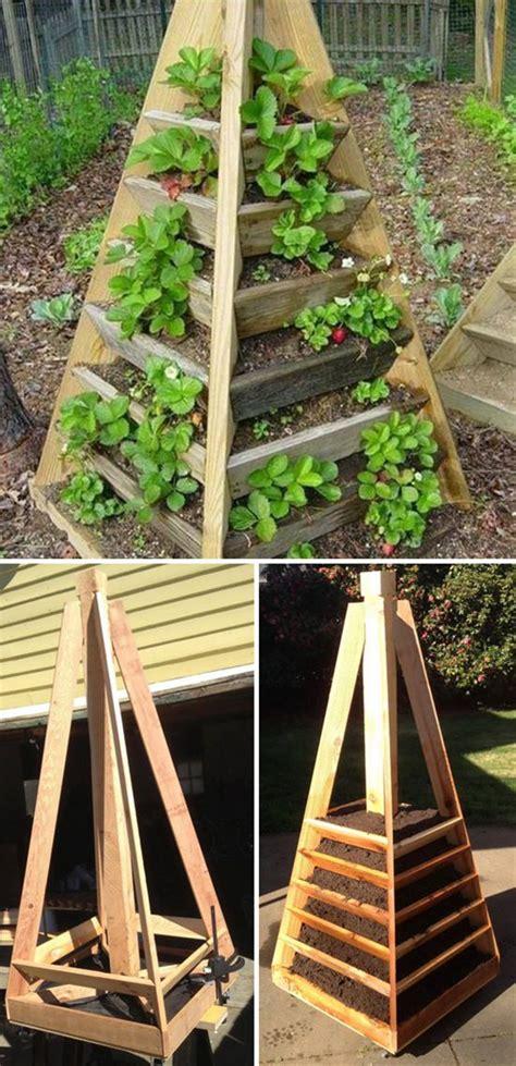 clever creative ways  grow strawberries gardening