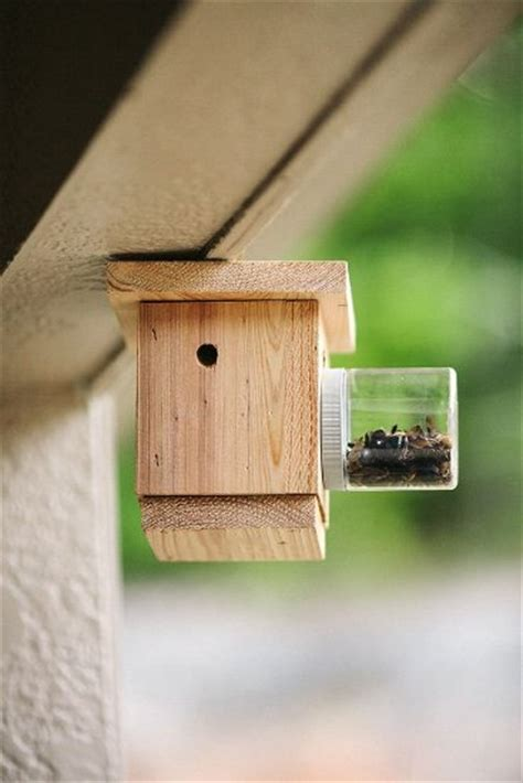 carpenter bee house diy carpenter bee house house best