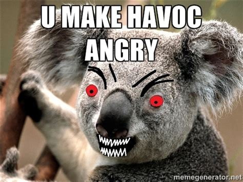 Angry Koala Meme - the bean trees quotes with page numbers quotesgram