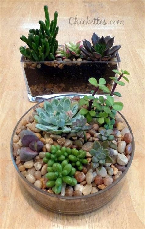 succulents planted in glass containers gardening