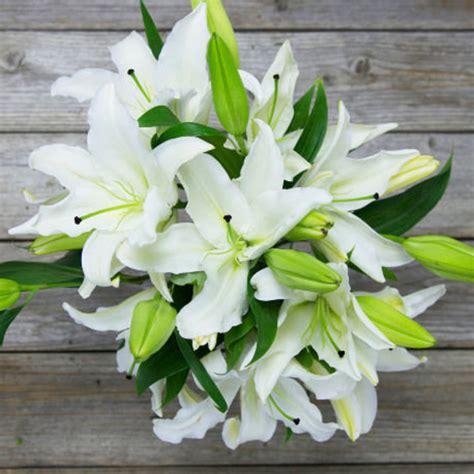 Box Bunga Jinjing Seri 5 ini 5 bunga putih popular naikkan seri majlis perkahwinan impiana