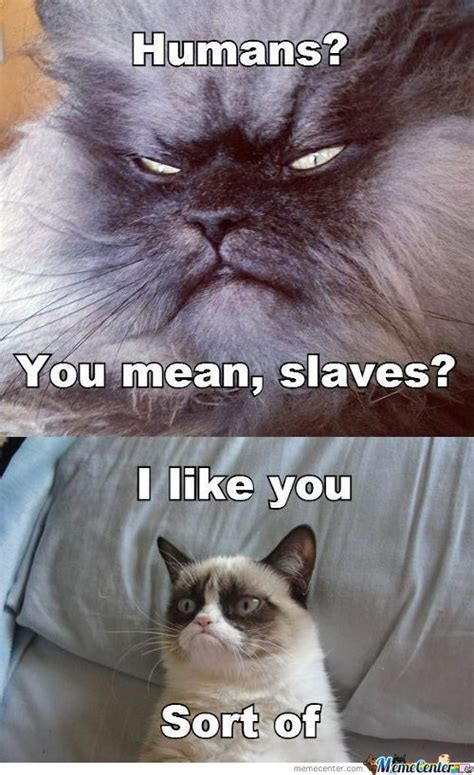Evil Cat Meme - evil cat memes best collection of funny evil cat pictures