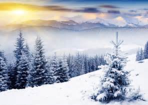 nature winter mountain christmas tree snow sun rays nature