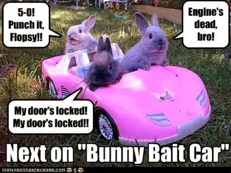 Funny Bunny Memes - rabbit ramblings funny bunny memes