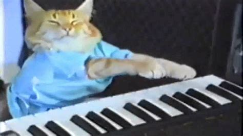 Cat Playing Piano Meme - katze spielt klavier 10 minuten 40 mal hd youtube