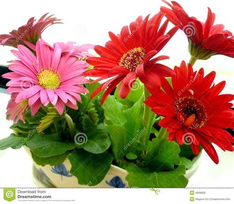 imagenes de flores extrañas y hermosas piękne kwiaty obraz royalty free obraz 4999836