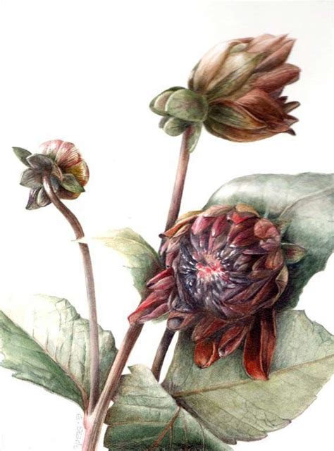 botanical painting in gouache 184994265x 19 best images about art elaine searle on