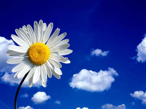 l 礙 un fiore raccogliere fiori per imparare poesie c era una volta