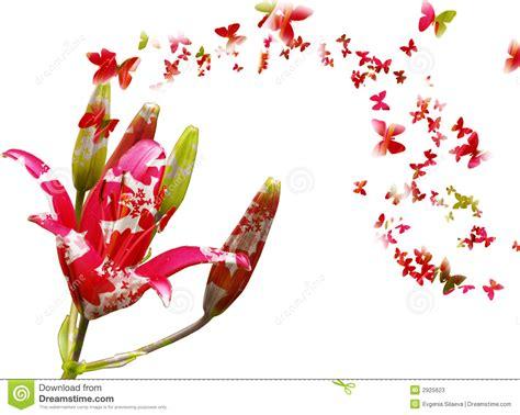 Imagenes Mariposas Con Rosas   flores y mariposas stock de ilustraci 243 n ilustraci 243 n de
