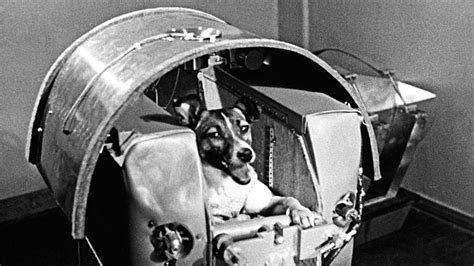 space puppies remembering laika space and soviet the new yorker