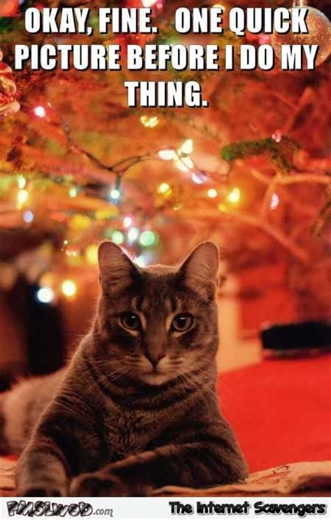 Cat Christmas Tree Meme - friday lol pics chuckles are on the house pmslweb
