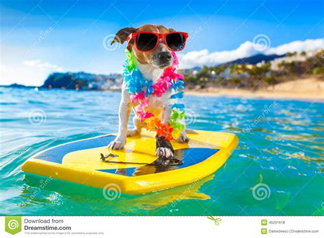 A Frame House Plans surfing dog stock photo image 45231618