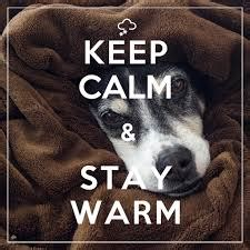 how to keep dogs warm in the winter how to keep your warm in winter pet attack