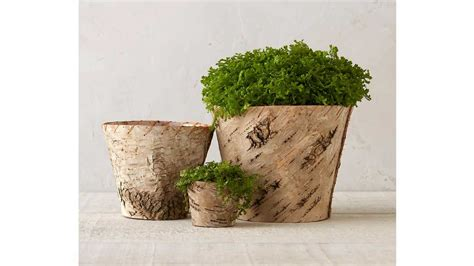 perfect pots  indoor plants   southern living