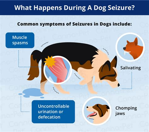 what does a seizure look like what does a seizure look like canna pet