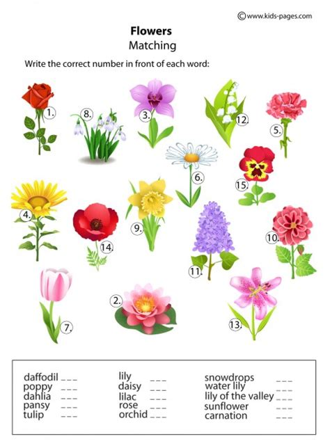 printable worksheets about flowers flowers matching worksheet