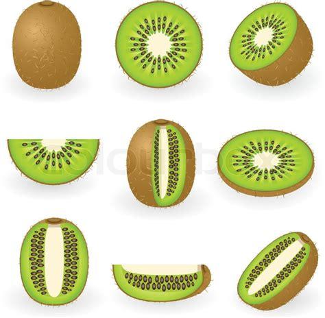 vector illustration  kiwi fruit stock vector colourbox