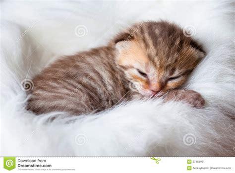 chat nouveau n 233 de ch 233 ri de sommeil image stock image