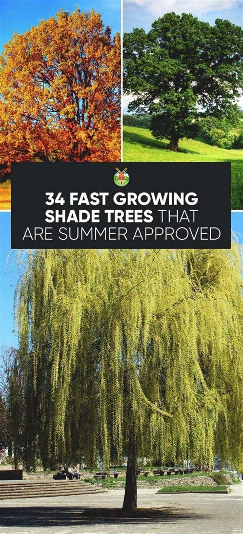 Schnell Wachsende Bäume 3490 by Die Besten 25 Schnell Wachsende B 228 Ume Ideen Auf