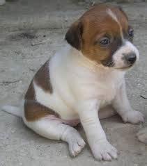 alimentazione cani piccola taglia alimentazione cani piccola taglia dieta cani piccola