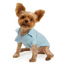 yorkie boy clothes 1000 images about oliver on pet clothes clothing and boy