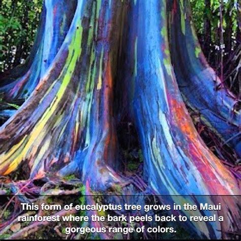 rainforest colors best 25 rainforest trees ideas only on